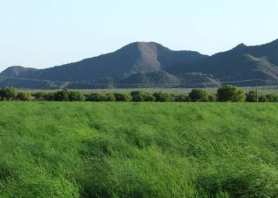 The vast fields